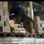 Furtos, brigas e caos marcam o aniversário do Supermercados Mateus
