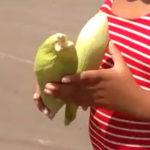"""Prefeitura dá espiga de milho como presente de """"Dia das Crianças"""""""