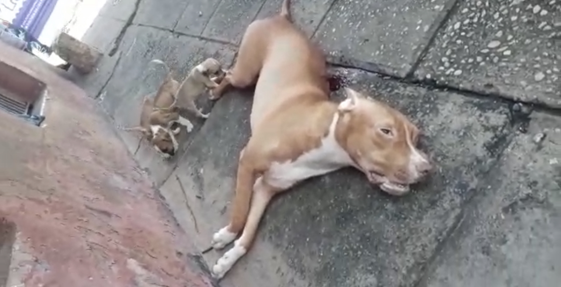 Policial mata cadela parida no Reviver, em São Luís
