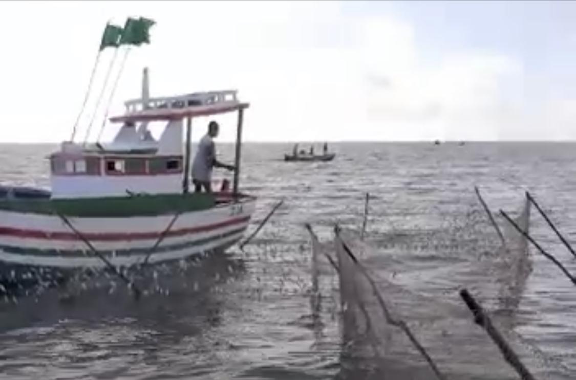 Pesca predatória em Panaquatira causa a morte de centenas de sardinhas
